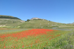 5-La-fioritura-delle-Lenticchie-di-Castelluccio-di-Norcia-sui-Monti-Sibillini